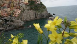 Cinque Terre Yellow Flowers