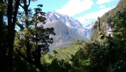 Forests And Mountain, Cleddau Valley, Fiordland National Park