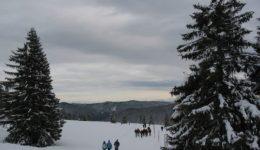 Snowy Trees, Feldberg, Schwartzwald