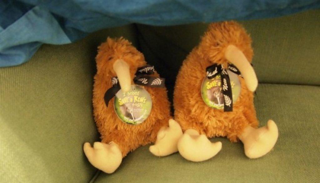 Our Kiwi Chicks