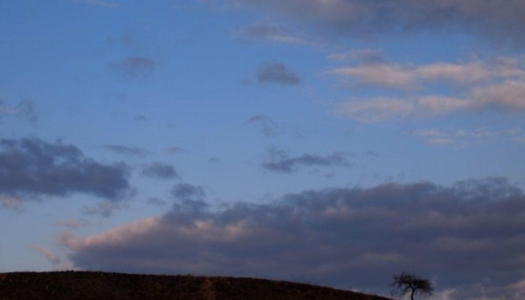 Peace tree at dawn